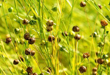 特种经济植物生产技术