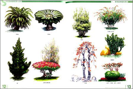 园林植物配置与造景